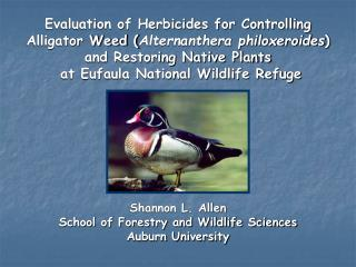 Evaluation of Herbicides for Controlling  Alligator Weed Alternanthera philoxeroides and Restoring Native Plants  at Euf