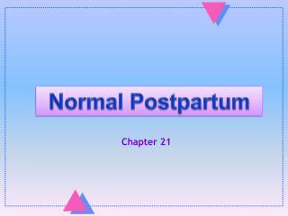 Normal Postpartum