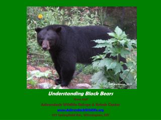Understanding Black Bears Steve Hall Adirondack Wildlife Refuge  Rehab Center AdirondackWildlife 977 Springfield Rd., Wi