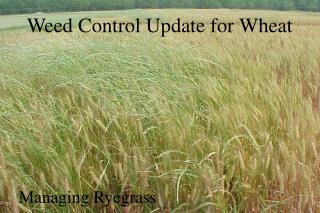 Weed Control Update for Wheat