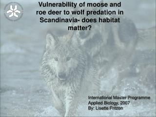 Vulnerability of moose and roe deer to wolf predation in Scandinavia- does habitat matter