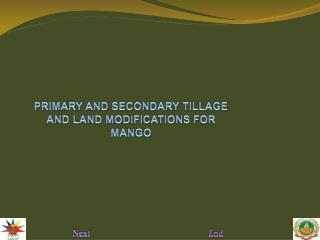 PRIMARY AND SECONDARY TILLAGE AND LAND MODIFICATIONS FOR MANGO