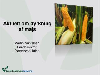 Aktuelt om dyrkning  af majs