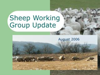 Sheep Working  Group Update