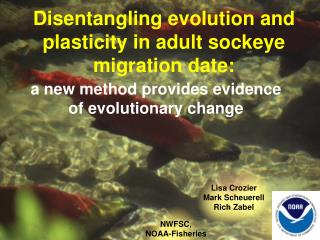 Disentangling evolution and plasticity in adult sockeye migration date:
