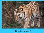 It s Animalia