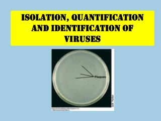 ISOLATION, QUANTIFICATION AND identification OF VIRUSES