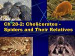 Ch 28-2: Chelicerates -Spiders and Their Relatives