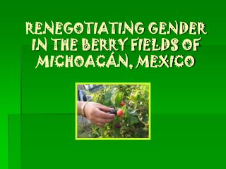 RENEGOTIATING GENDER IN THE BERRY FIELDS OF MICHOAC N, MEXICO