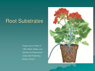 Root Substrates
