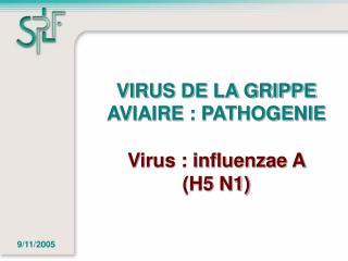 VIRUS DE LA GRIPPE AVIAIRE : PATHOGENIE  Virus : influenzae A  H5 N1