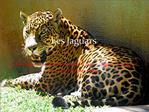 Les Jaguars