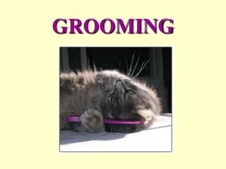 grooming-cats ppt.