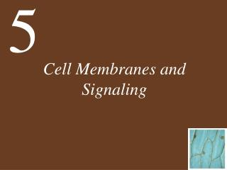 Cell Membranes and Signaling