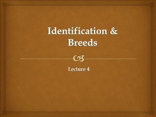 Identification   Breeds