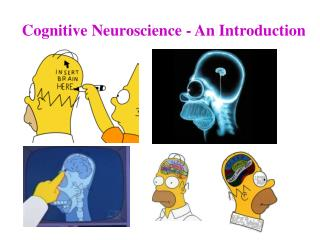 Cognitive Neuroscience - An Introduction