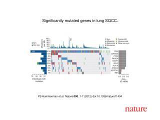 PS Hammerman et al. Nature 000, 1-7 2012 doi:10.1038