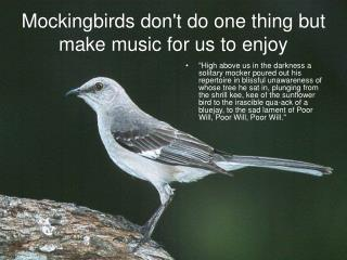 Mockingbirds dont do one thing but make music for us to enjoy