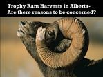 Trophy Ram Harvests in Alberta-   Are there reasons to be concerned