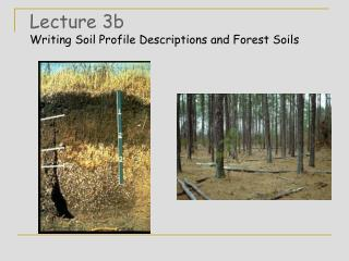 Lecture 3b Writing Soil Profile Descriptions and Forest Soils