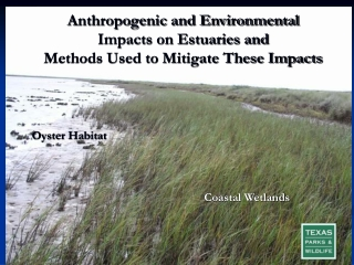 Wetlands Management II - Compensatory Mitigation