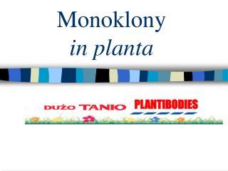Monoklony  in planta