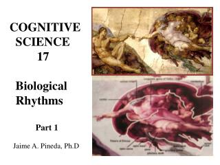 COGNITIVE   SCIENCE          17    Biological   Rhythms      Part 1     Jaime A. Pineda, Ph.D.