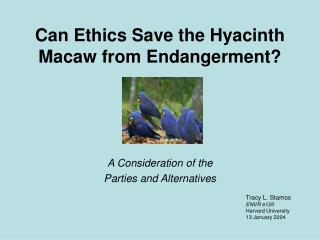 Can Ethics Save the Hyacinth  Macaw from Endangerment