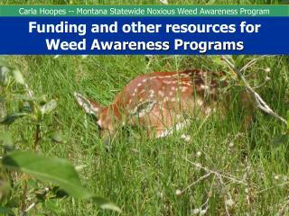 Carla Hoopes -- Montana Statewide Noxious Weed Awareness Program