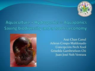 Aquaculture  Hydroponics  Aquaponics Saving biodiversity and a town s economy
