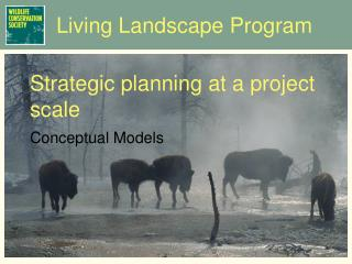 Strategic planning at a project scale