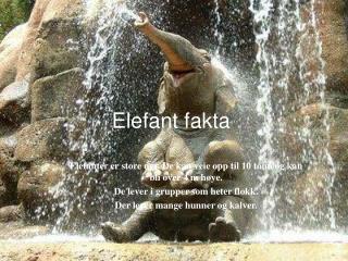 Elefant fakta