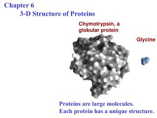 Chapter 6  3-D Structure of Proteins