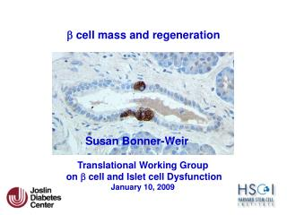 B cell mass and regeneration