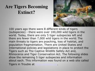 Are Tigers Becoming Extinct