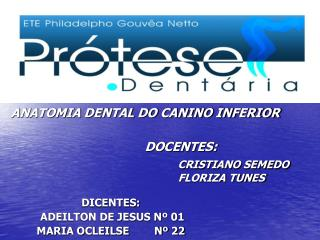 ANATOMIA DENTAL DO CANINO INFERIOR                                                          DOCENTES: