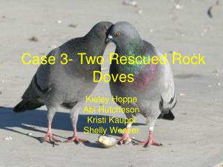 Case 3- Two Rescued Rock Doves