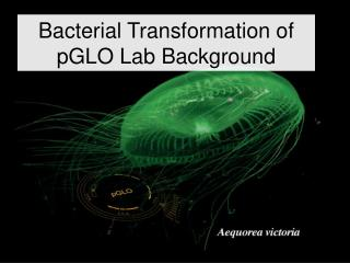 Bacterial Transformation of pGLO Lab Background