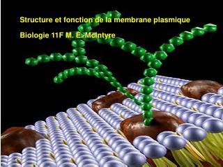 Structure et fonction de la membrane plasmique Bi Biologie 11F M. E. McIntyre