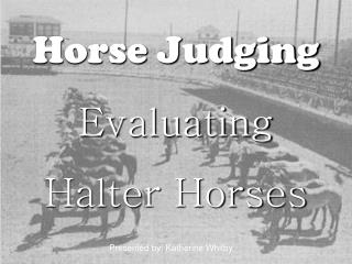 Horse Judging  Evaluating  Halter Horses