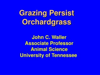 Grazing Persist Orchardgrass