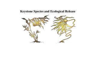 Keystone Species and Ecological Release
