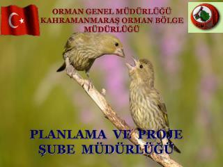 ORMAN GENEL M D RL G  KAHRAMANMARAS ORMAN B LGE M D RL G