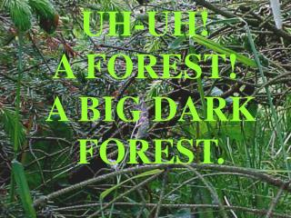 UH-UH A FOREST A BIG DARK FOREST.