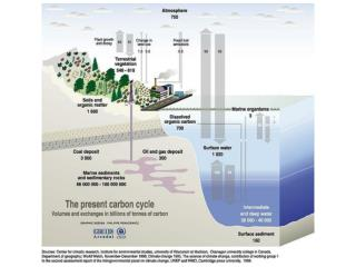 Oceanic Carbon Cycle