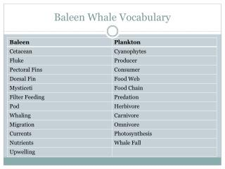 Baleen Whale Vocabulary