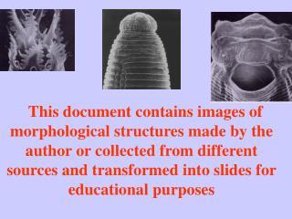 MORPHOLOGY  OF  PLANT PARASITIC NEMATODES