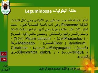 Leguminosae