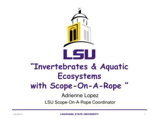 Invertebrates  Aquatic Ecosystems  with Scope-On-A-Rope