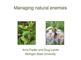 Managing natural enemies